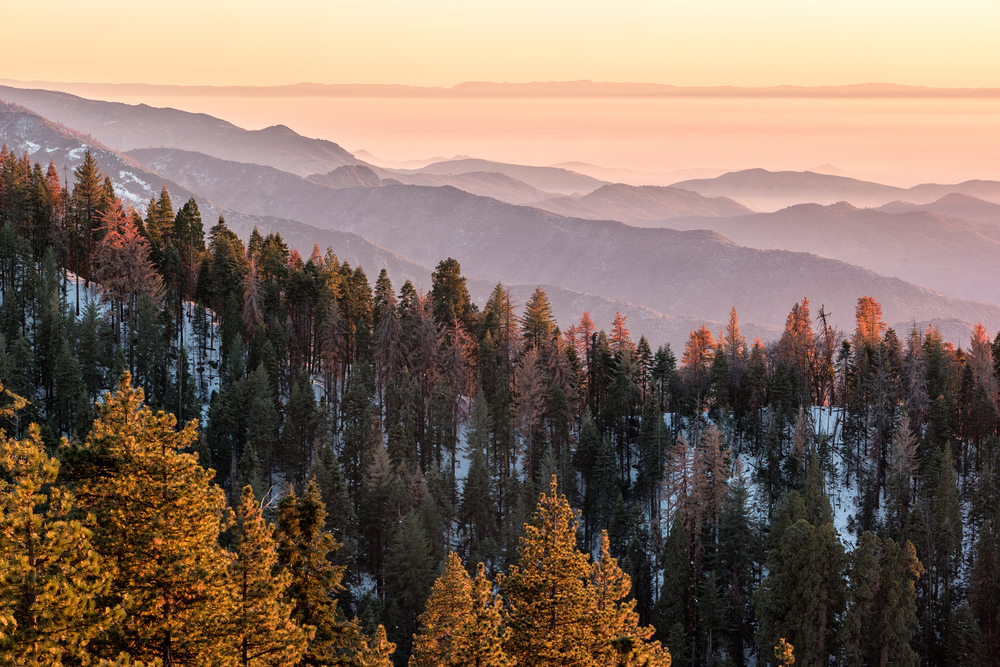 Wasim Muklashy Photography_Sequoia National Park_California_December 2015_-SAM_4172-Edit.jpg