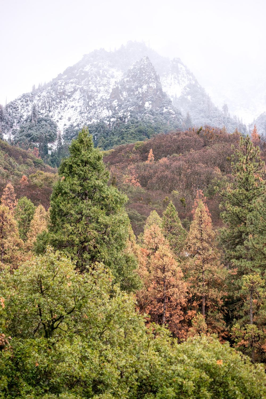 Wasim Muklashy Photography_Sequoia National Park_California_December 2015_-SAM_4298-Edit.jpg