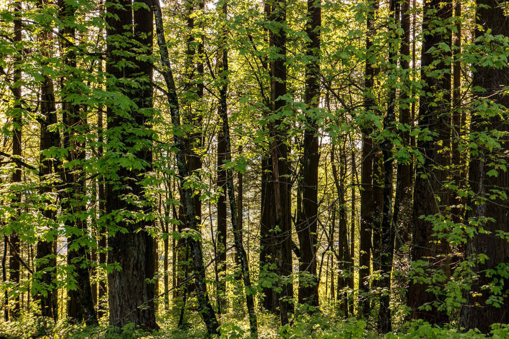 Wasim Muklashy Photography_Wasim of Nazareth Photography_Pacific Northwest_Oregon Washington_Months 1-3 Highlights_073.jpg