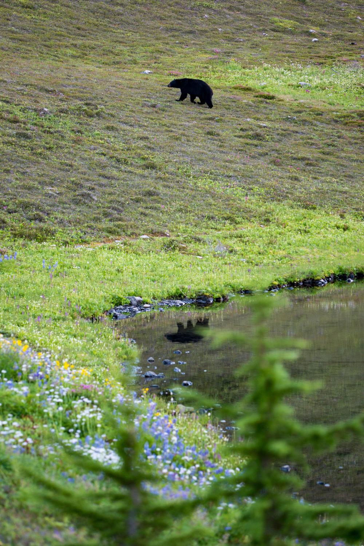 Wasim Muklashy Photography_Olympic National Park_High Divide Loop_024.jpg
