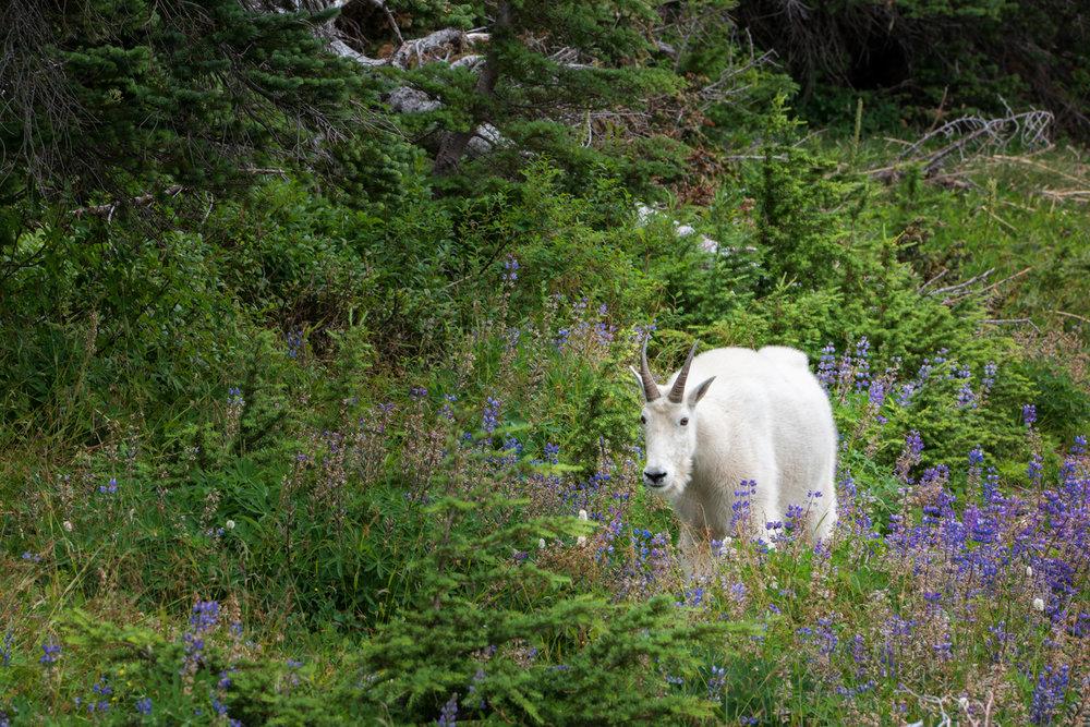 Wasim Muklashy Photography_Olympic National Park_High Divide Loop_052.jpg