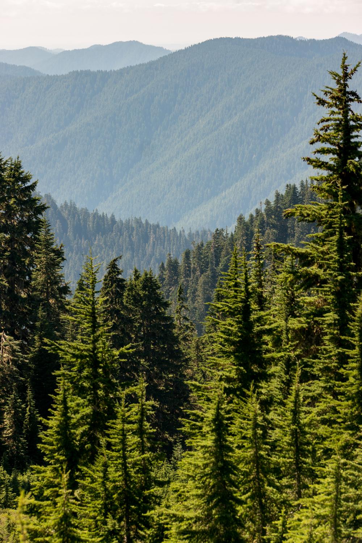 Wasim Muklashy Photography_Olympic National Park_High Divide Loop_099.jpg