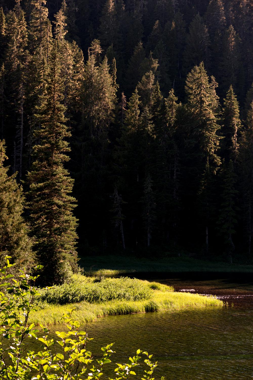Wasim Muklashy Photography_Olympic National Park_High Divide Loop_104.jpg