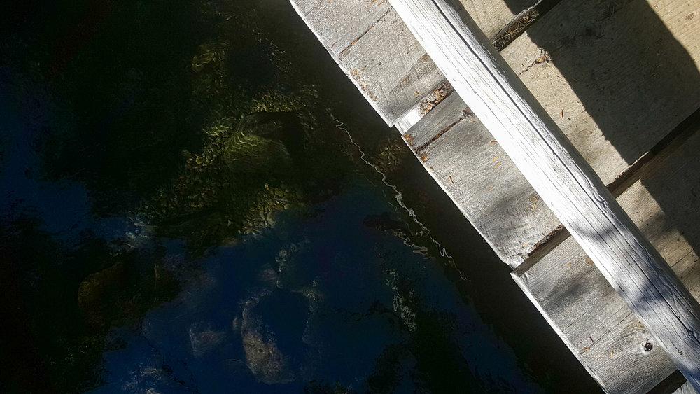 Wasim Muklashy Photography_Olympic National Park_High Divide Loop_141.jpg