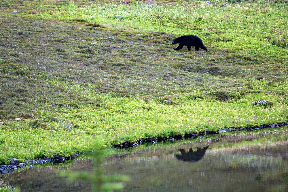 Wasim Muklashy Photography_Olympic National Park_High Divide Loop_023.jpg