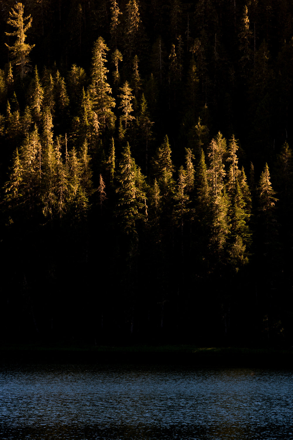 Wasim Muklashy Photography_Olympic National Park_High Divide Loop_109.jpg
