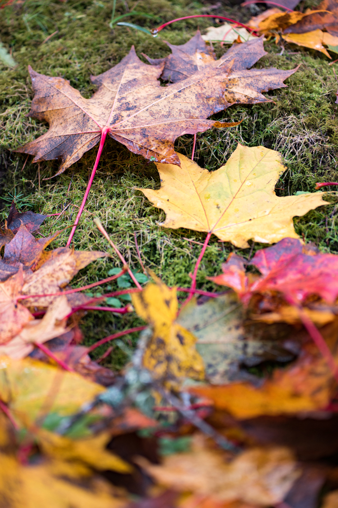 Wasim Muklashy Photography_Portland_Oregon_Fall Colors_Autumn_Nature_003.jpg