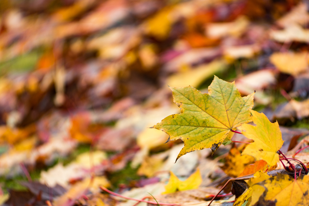 Wasim Muklashy Photography_Portland_Oregon_Fall Colors_Autumn_Nature_004.jpg