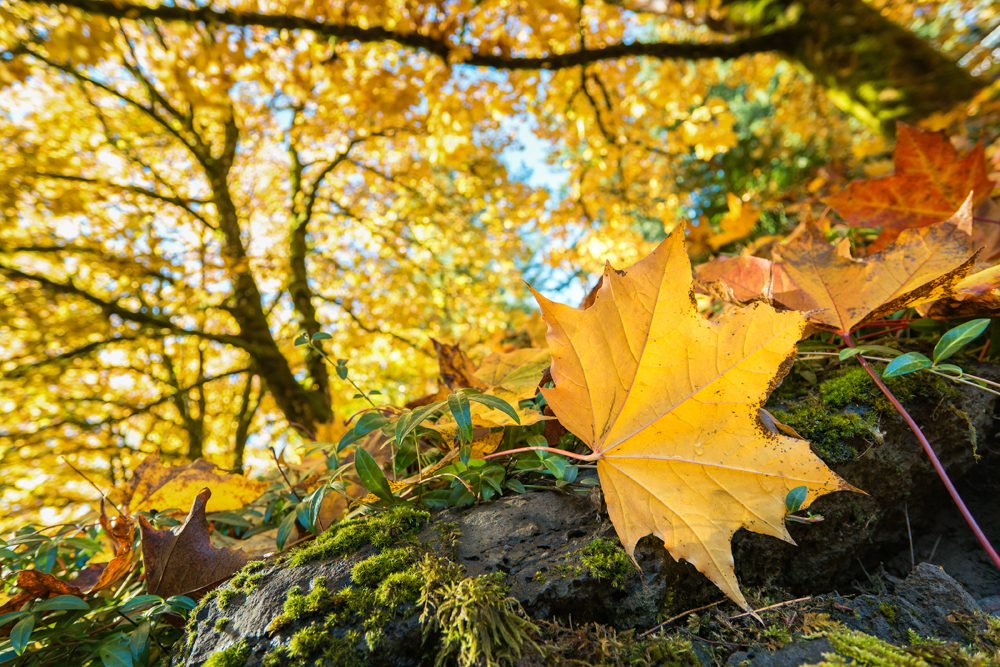 Wasim Muklashy Photography_Portland_Oregon_Fall Colors_Autumn_Nature_014.jpg