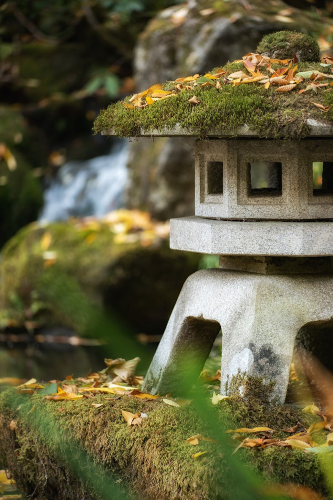 Wasim Muklashy Photography_Wasim of Nazareth_Japanese Garden_Fall_Portland_Oregon_05.jpg