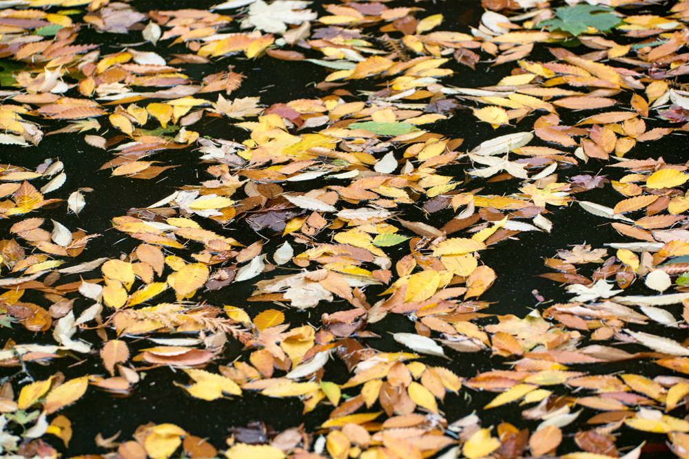Wasim Muklashy Photography_Wasim of Nazareth_Japanese Garden_Fall_Portland_Oregon_03.jpg