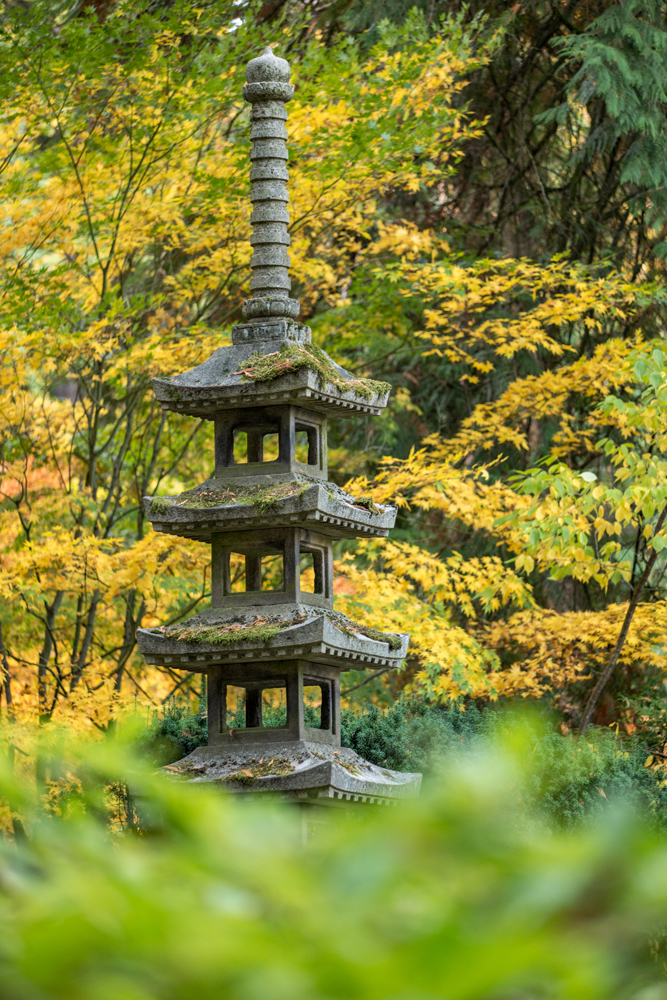 Wasim Muklashy Photography_Wasim of Nazareth_Japanese Garden_Fall_Portland_Oregon_10.jpg