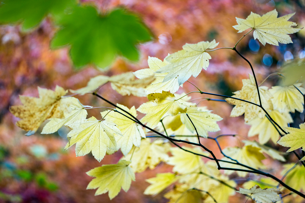 Wasim Muklashy Photography_Wasim of Nazareth_Japanese Garden_Fall_Portland_Oregon_19.jpg