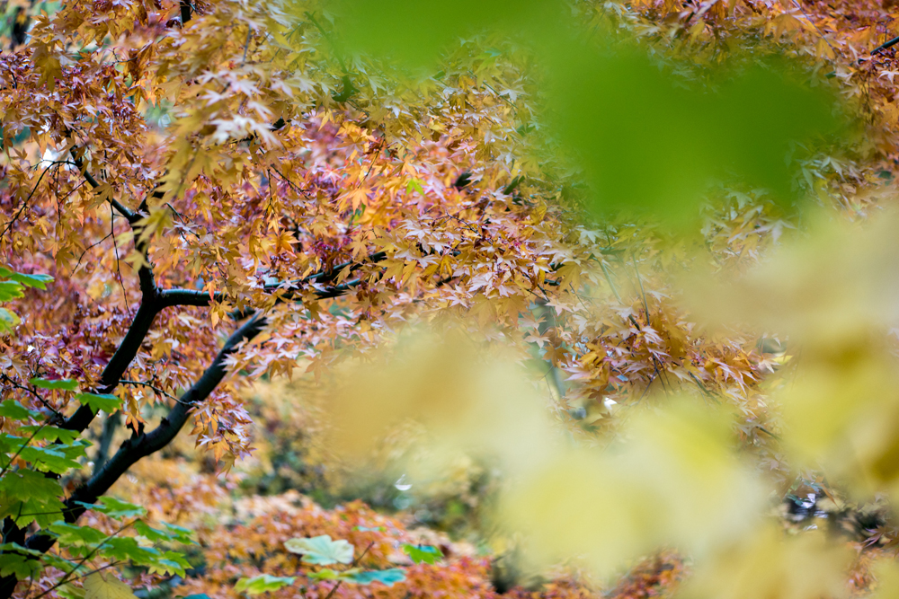 Wasim Muklashy Photography_Wasim of Nazareth_Japanese Garden_Fall_Portland_Oregon_18.jpg