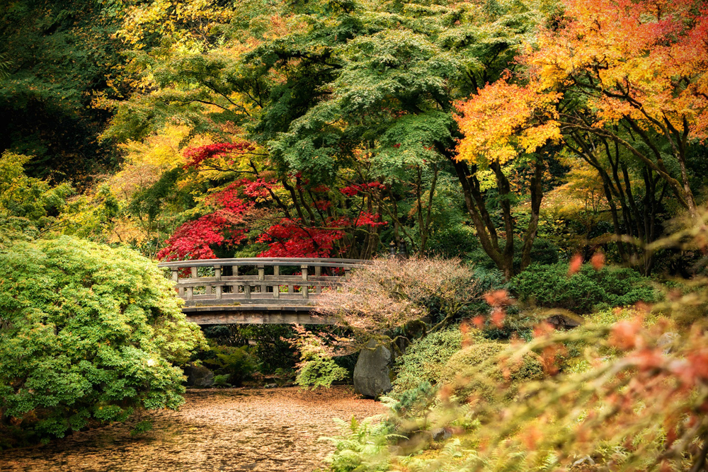 Wasim Muklashy Photography_Wasim of Nazareth_Japanese Garden_Fall_Portland_Oregon_37.jpg