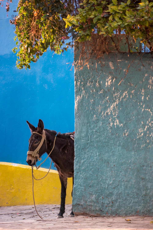 Wasim Muklashy Photography_Guanajuato_Mexico_078.jpg