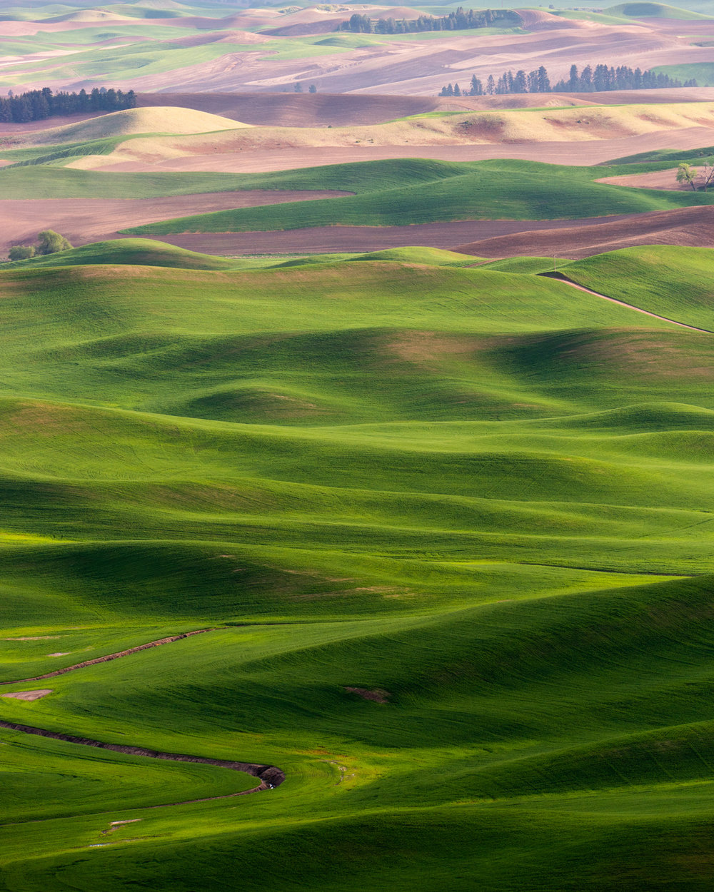 Wasim Muklashy Photography_Tesla Trip_Columbia River Gorge_Oregon_Washington_Palouse_113.jpg