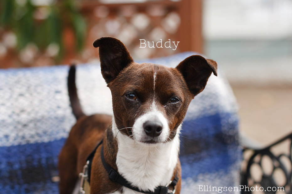 Seal Beach Animal Care Center Adoptable Shelter Dogs by Ellingsen Photography-Buddy the Terrier Mix