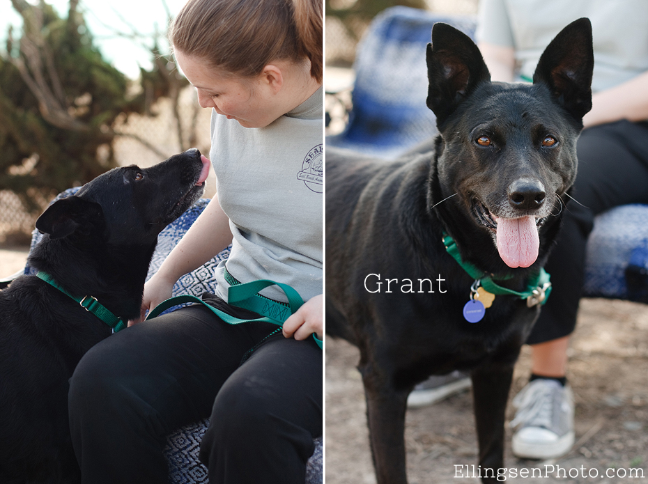 Seal Beach Animal Care Center Adoptable Shelter Dogs by Ellingsen Photography-Grant the Shepherd Lab Mix