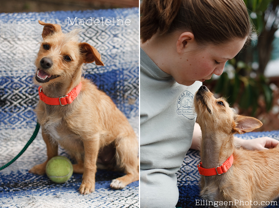 Seal Beach Animal Care Center Adoptable Shelter Dogs by Ellingsen Photography-Madeleine the Terrier Mix