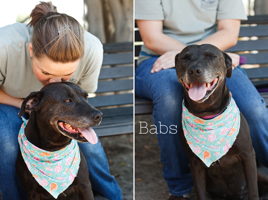 Ellingsen Photography Seal Beach Animal Care Center Adoptable Dogs Shelter Rescue Orange County-Babs