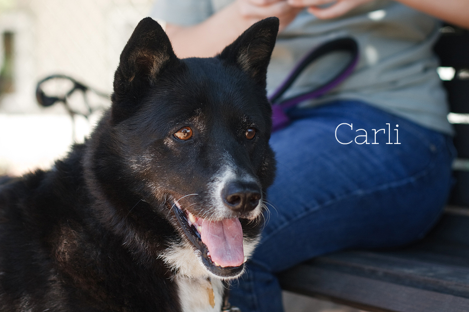 Ellingsen Photography Seal Beach Animal Care Center Adoptable Dogs Shelter Rescue Orange County-Carli