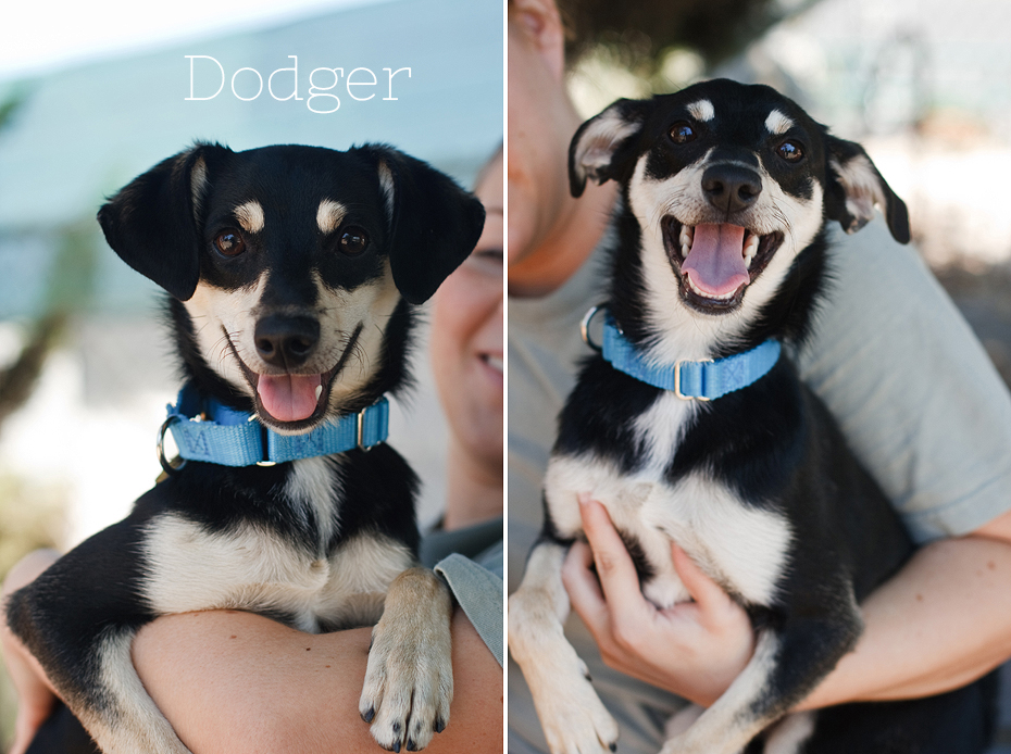 Ellingsen Photography Seal Beach Animal Care Center Adoptable Dogs Shelter Rescue Orange County-Dodger