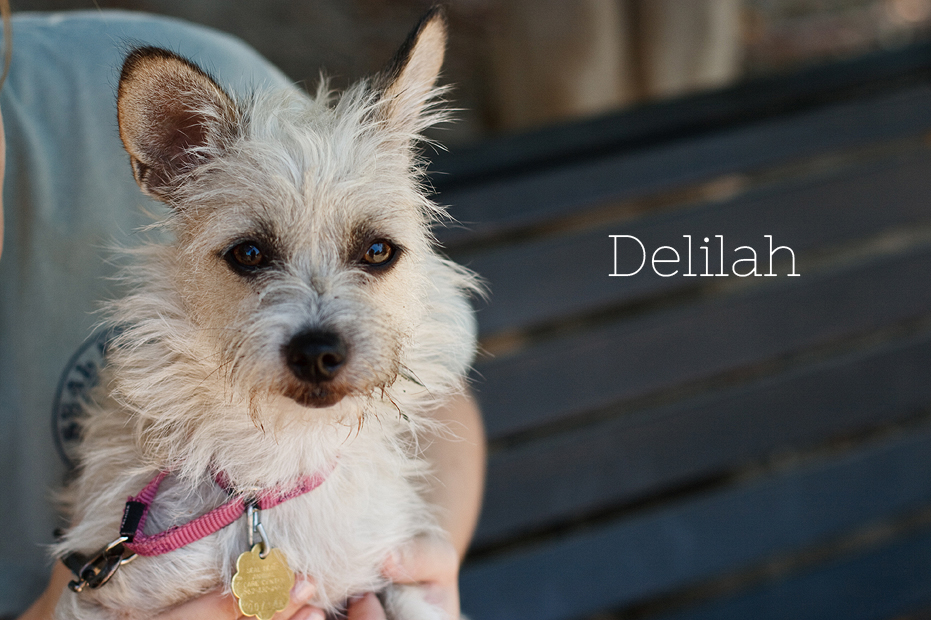 Ellingsen Photography Seal Beach Animal Care Center Adoptable Dogs Shelter Rescue Orange County-Delilah