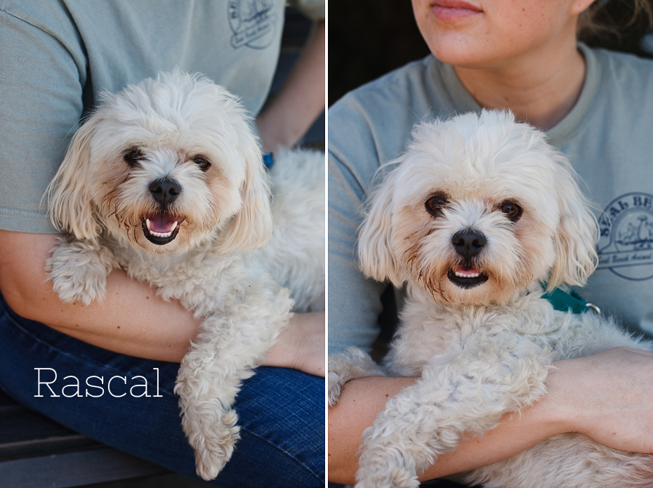 Ellingsen Photography Seal Beach Animal Care Center Adoptable Dogs Shelter Rescue Orange County-Rascal 2