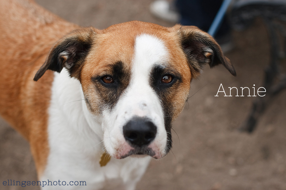 Ellingsen Photography Orange County SBACC Adoptable Shelter Rescue Dogs-Annie