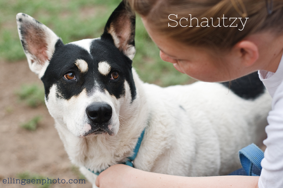 Ellingsen Photography Orange County SBACC Adoptable Shelter Rescue Dogs-Schautzy