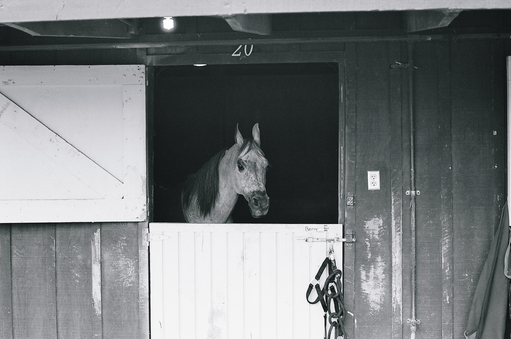 Ellingsen Photography Santa Barbara Day Trip Ilford B&W Film Arabian Horse Stall