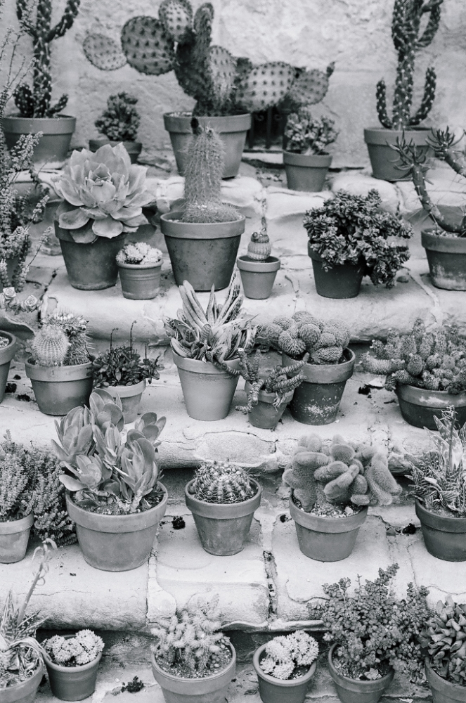 Ellingsen Photography Santa Barbara Day Trip Ilford B&W Film Mission Succulents