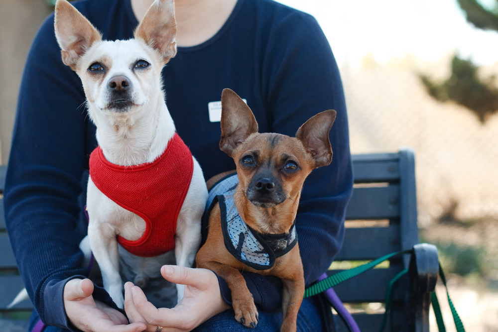 Seal Beach Animal Care Center Adoptable Dogs by Ellingsen Photography-Kiwi & Frodo
