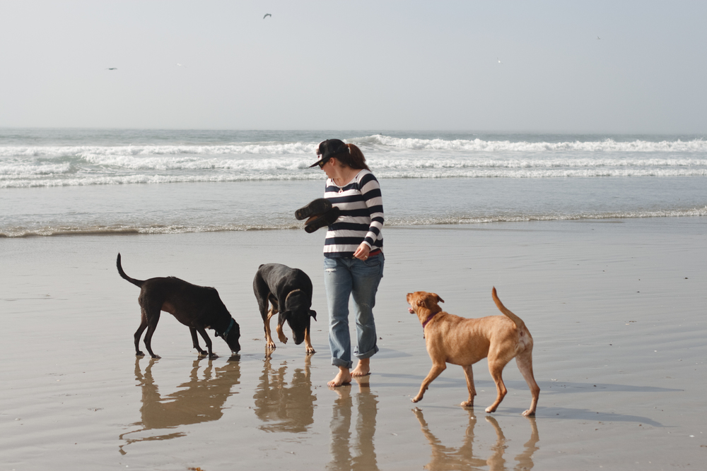 Ellingsen Photography Huntington Dog Beach Digging All Together