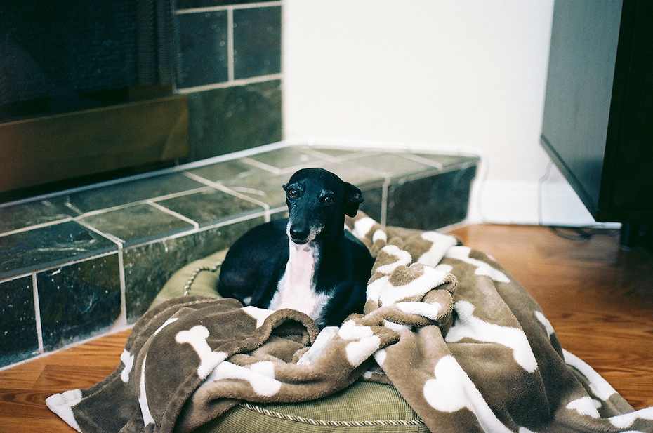 Ellingsen Photography Ektar Film Scans Dante and His Bed