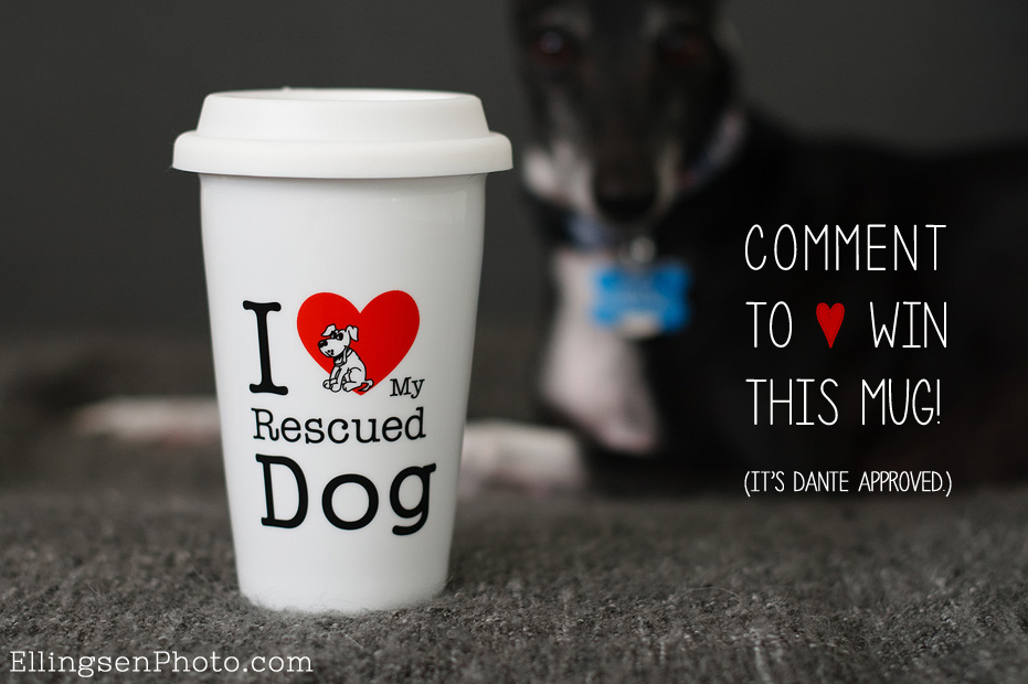 I Heart My Rescued Dog Travel Mug Giveaway by Ellingsen Photography