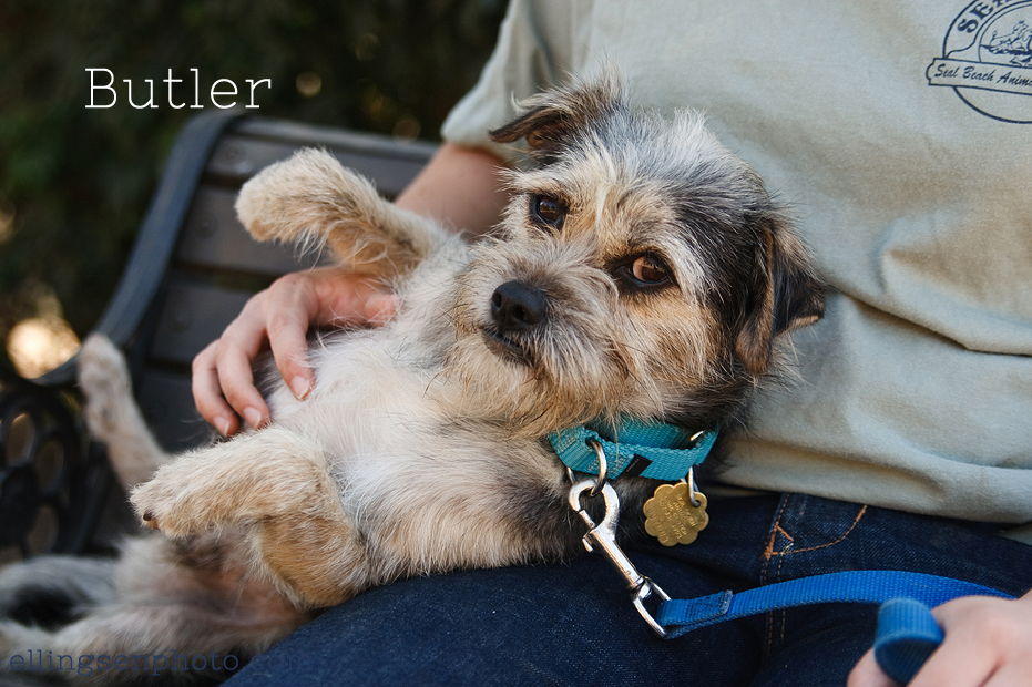 Ellingsen Photography Orange County SBACC Adoptable Dogs-Butler