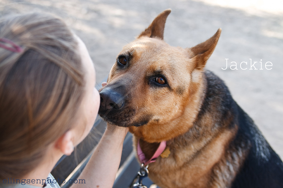 Ellingsen Photography Orange County SBACC Adoptable Dogs-Jackie-5