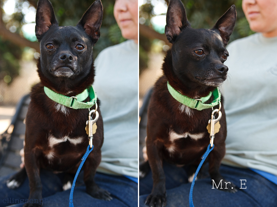 Ellingsen Photography Orange County SBACC Adoptable Dogs-Mr E