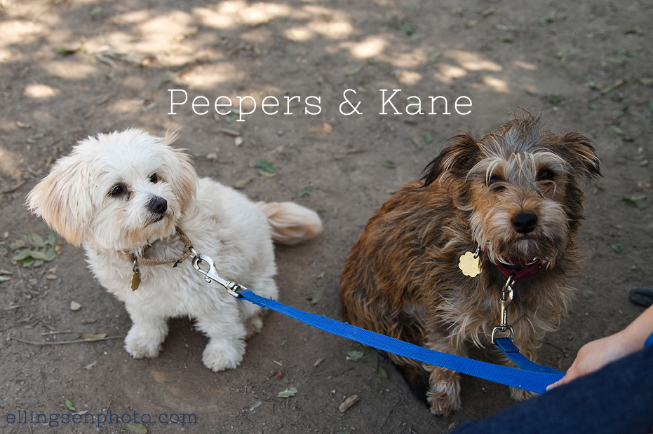 Ellingsen Photography Orange County SBACC Adoptable Dogs-Peepers & Kane-8