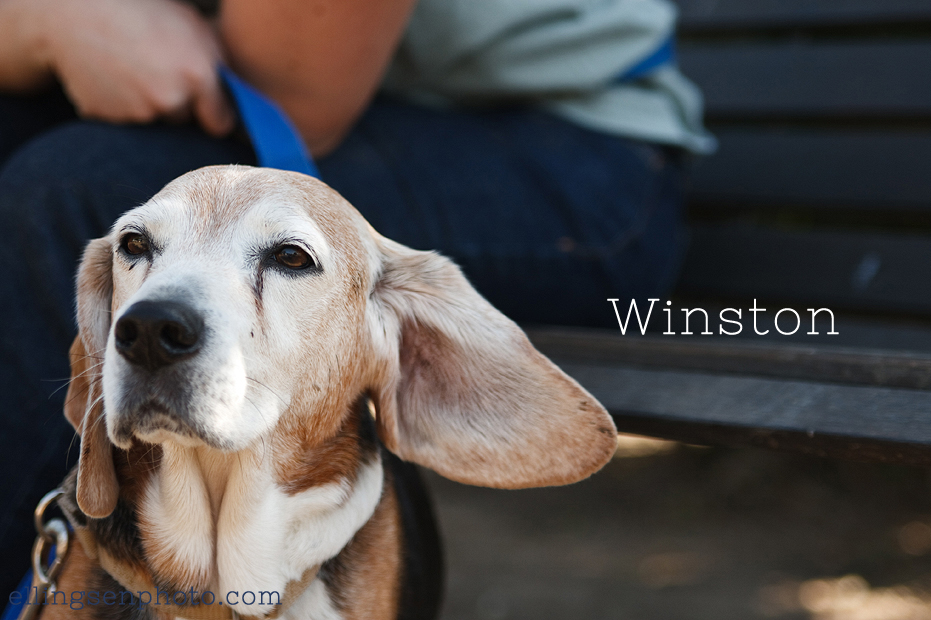 Ellingsen Photography Orange County SBACC Adoptable Dogs-Winston-3