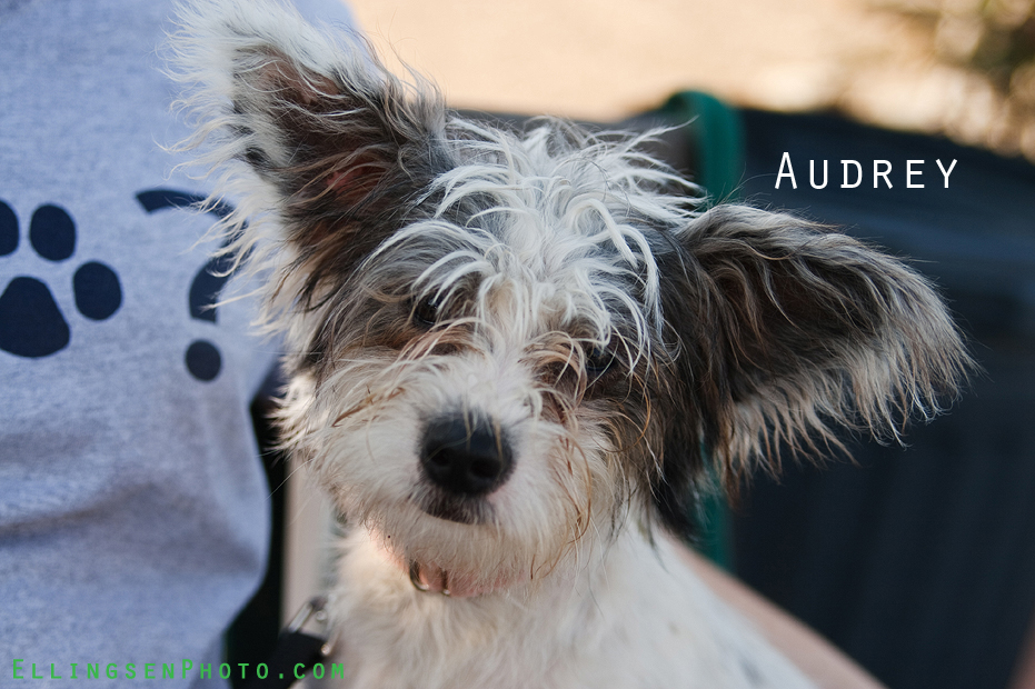 Ellingsen Photography SBACC Adoptables-Audrey