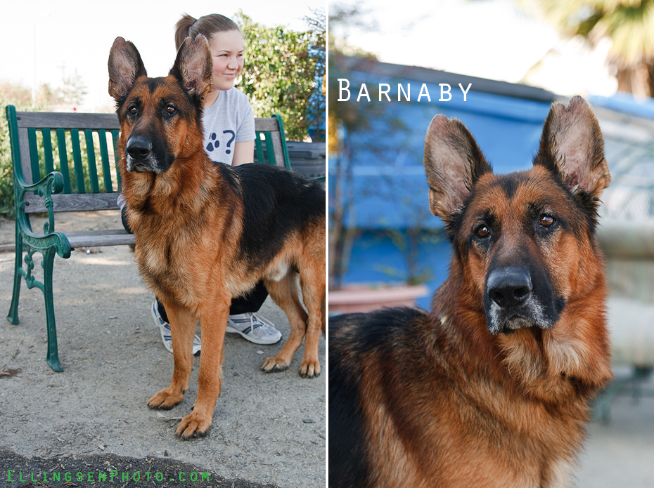 Ellingsen Photography SBACC Adoptables-Barnaby