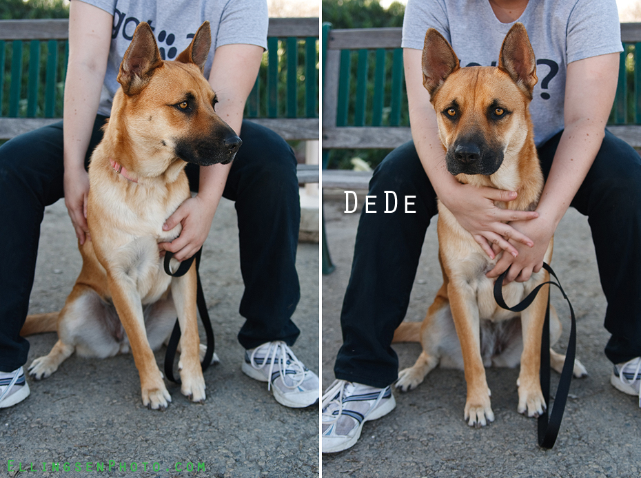 Ellingsen Photography SBACC Adoptables-Dede