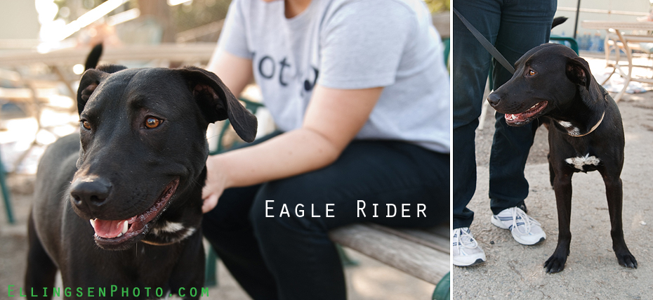 Ellingsen Photography SBACC Adoptables-Eagle Rider