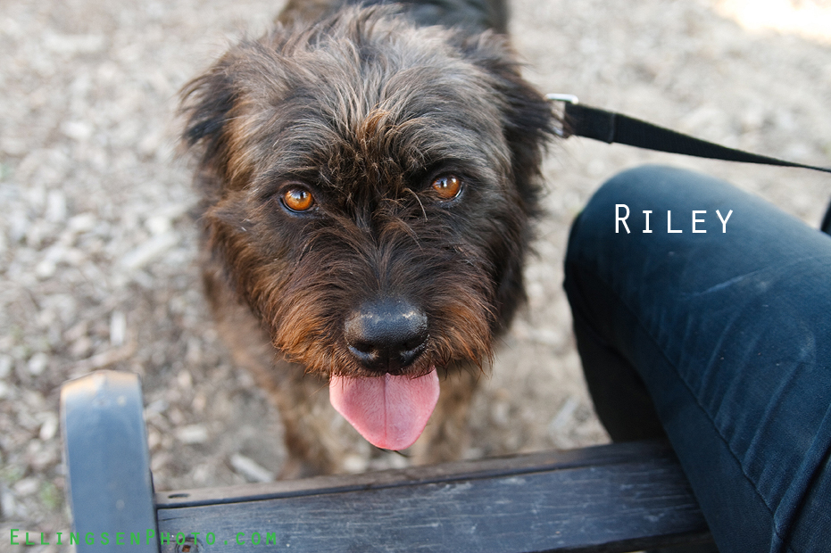 Ellingsen Photography SBACC Adoptables-Riley