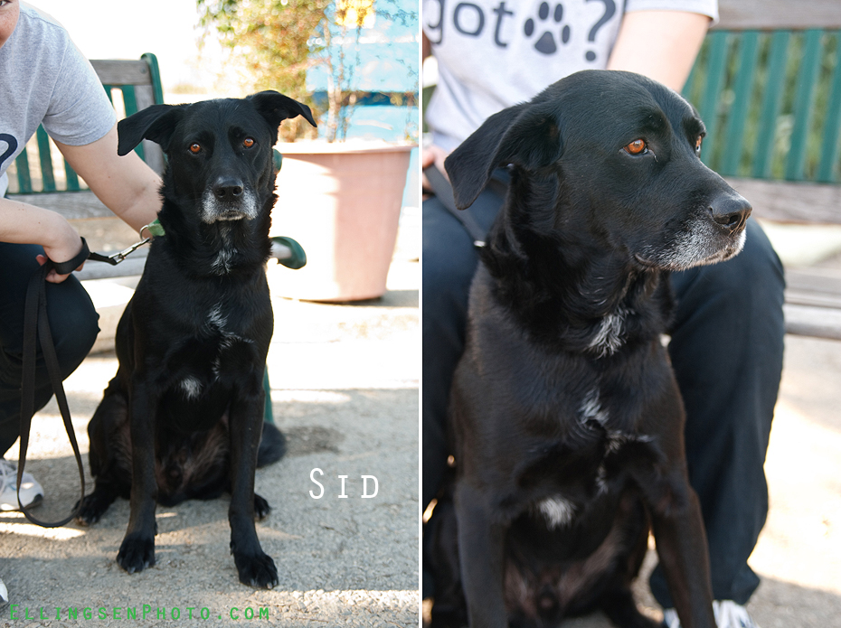 Ellingsen Photography SBACC Adoptables-Sid