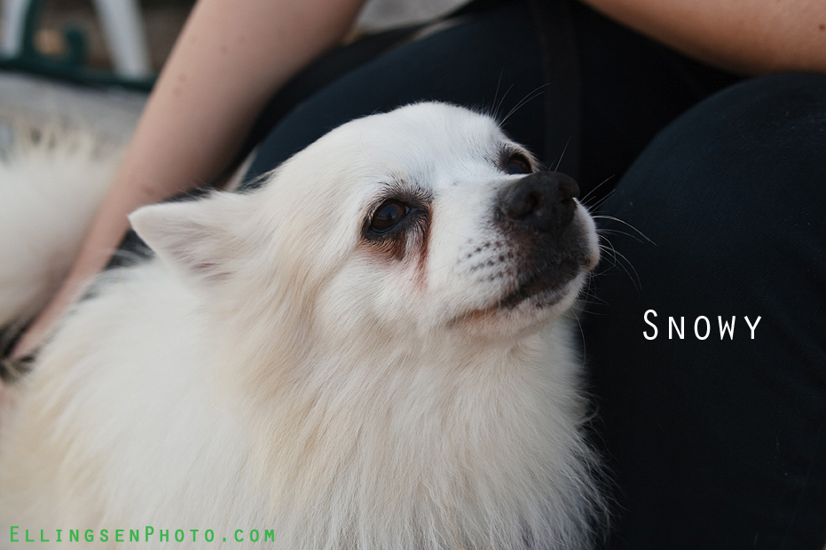 Ellingsen Photography SBACC Adoptables-Snowy