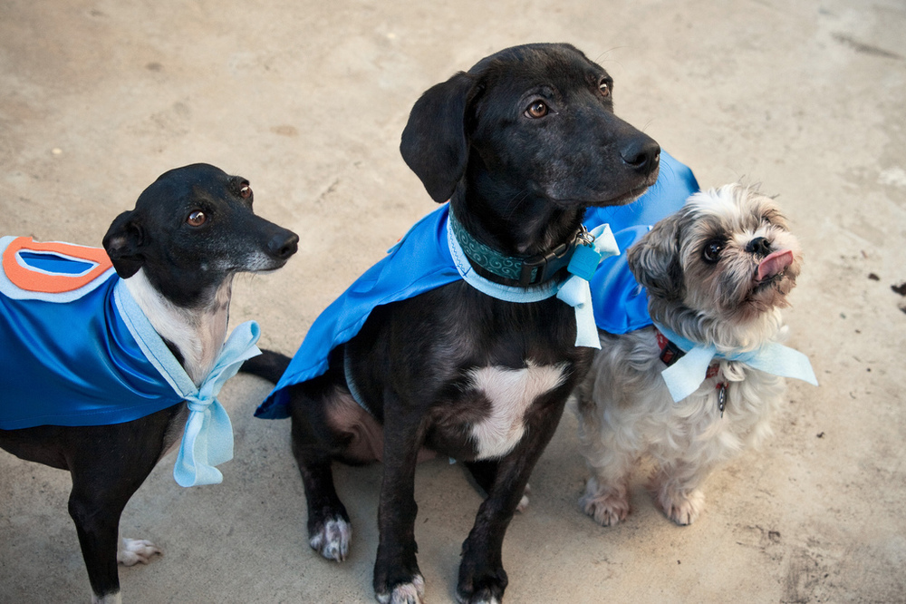 Ellingsen Photography Halloween Dog Costume Capes (2)
